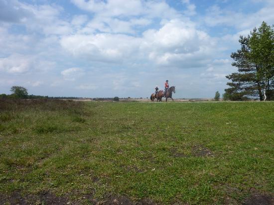 NH Veluwe Sparrenhorst: Horses on the Heath near Elspeet