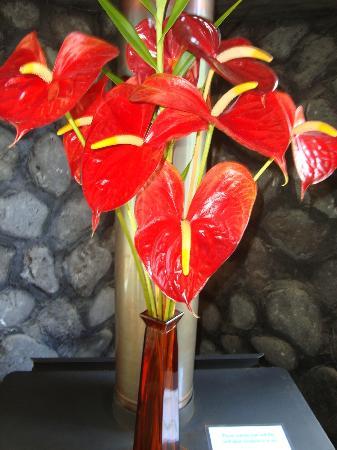 Hapu'u Fern Cottage at Volcano Village: Flowers Awaited us
