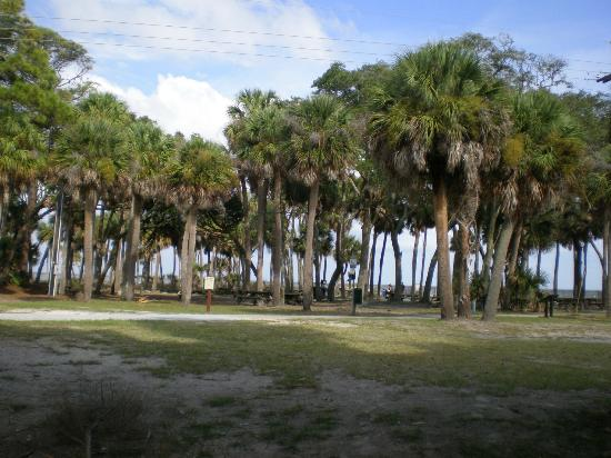 Hunting Island State Park: Hunting Island-beach is on the other side of trees