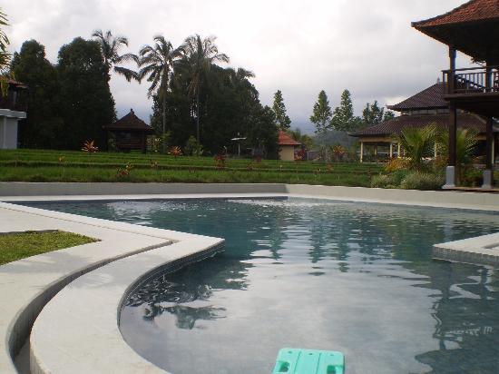 Atres Villa Homestay: piscine et rizière