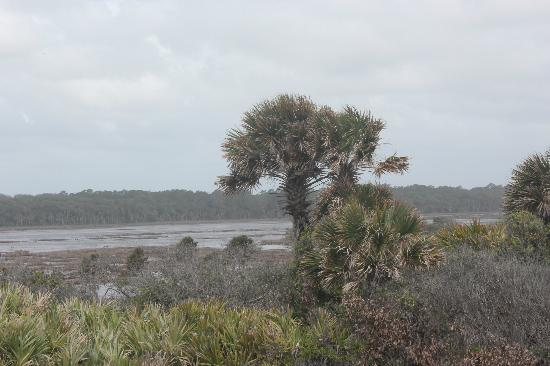 Guana Tolomato Matanzas National Estuarine Research Reserve : These palms have seen their share of storms I bet