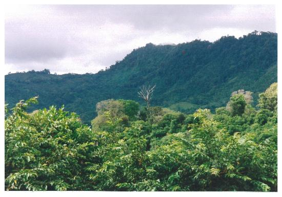 Travel Around Costa Rica Transportation and Guides: Jungle hill side in Dominicalito