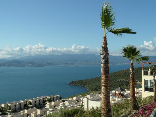 Flamingo Resort: View 2