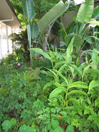 Dinah's Garden Hotel: Lush grounds