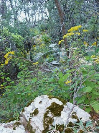 November flowers in Madera Canyon