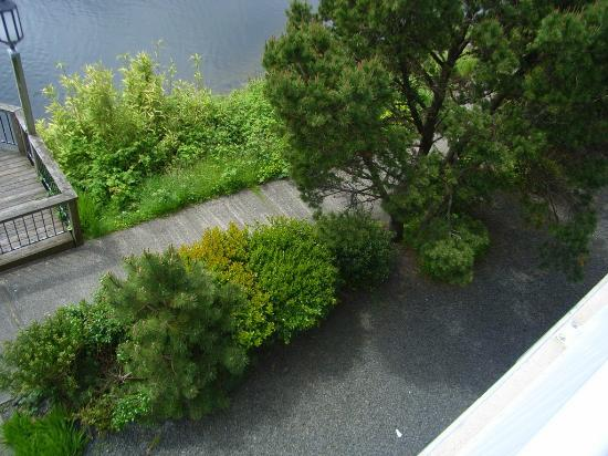 Holiday Inn Express & Suites Seaside-Convention Center : Walking path along the river