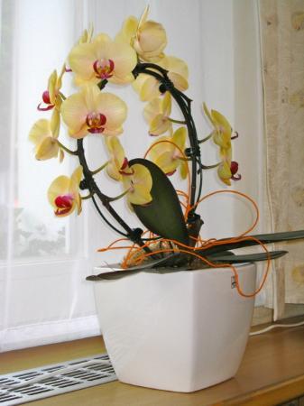 Restaurant Engel: Orchidee flower