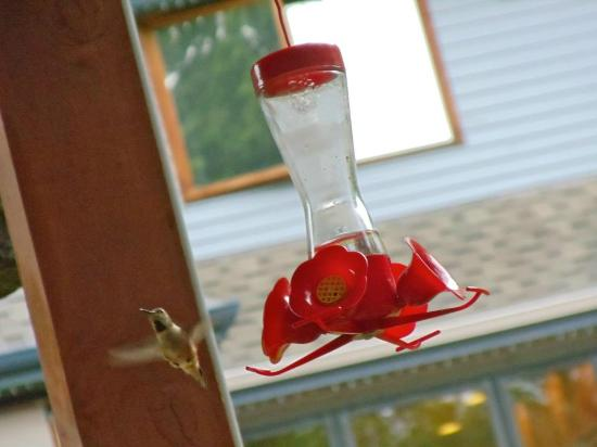 ‪‪Meritage Meadows Inn‬: Hummingbird in the Gazebo‬