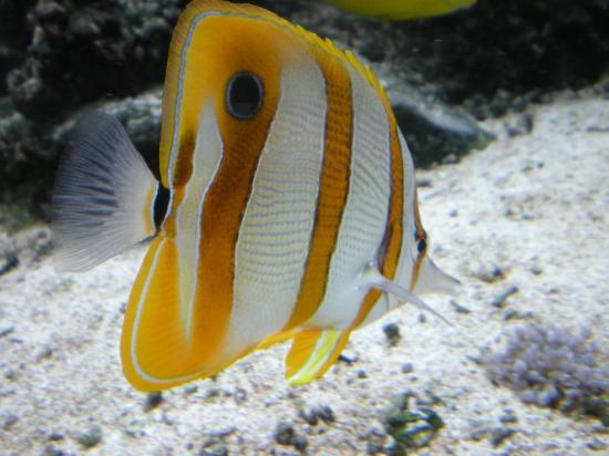 Denmark's Aquarium