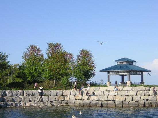 Mississauga, Canada: Seagulls hollering