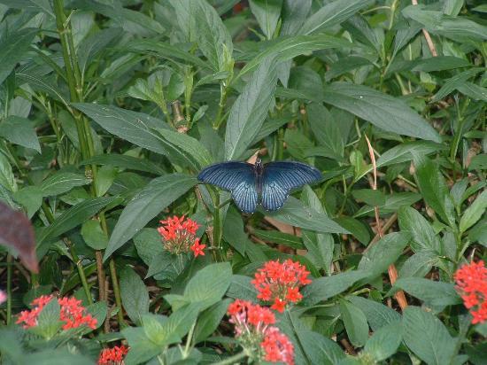 Frederik Meijer Gardens U0026 Sculpture Park: Butterfly Time At The Gardens
