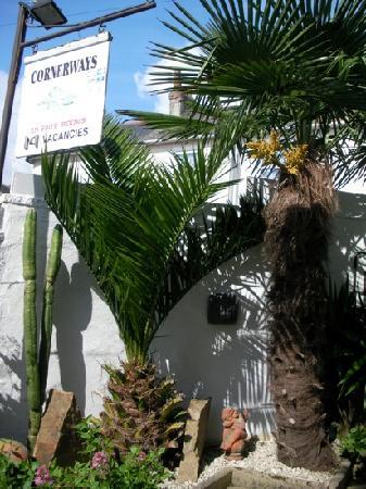 Cornerways Guest House: subtropical plants at Cornerways , Penzance