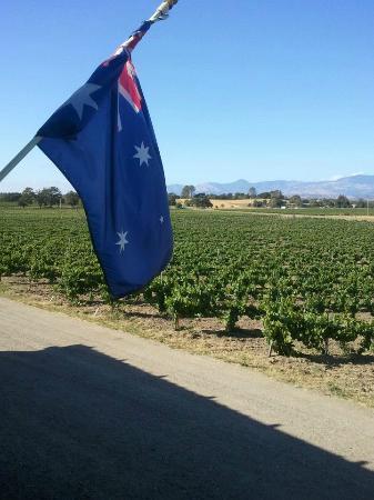 Kalyra Winery: Front enterance overlooking the vineyard