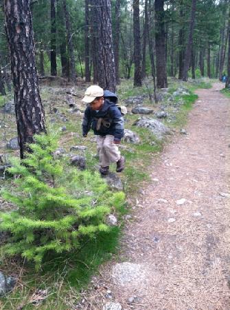 Centennial Trail: hiking