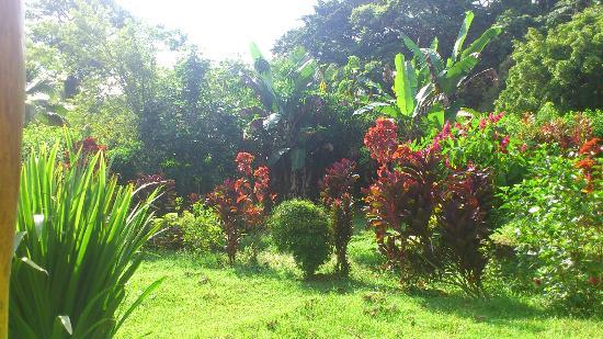 Coco Loco Lodge: Vue du jardin lorsqu'on est dans le hamac