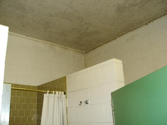 American Heritage Campground: moldy ceiling