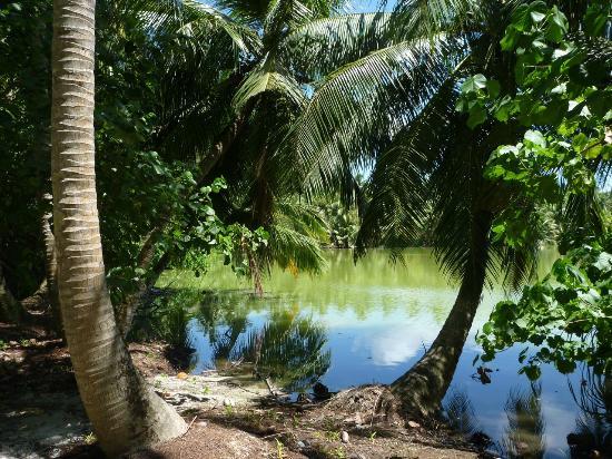 Shangri-La's Villingili Resort and Spa Maldives: one of the lakes (there are 3)