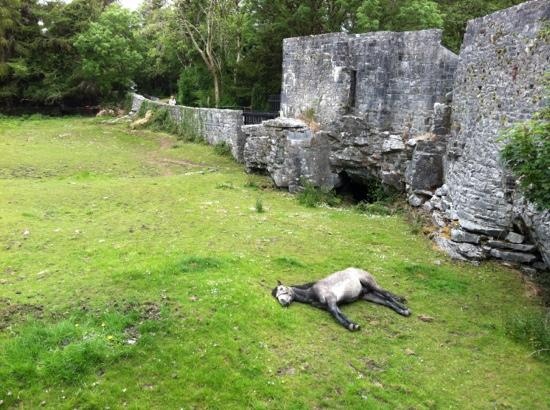 Aughnanure Castle : The Sleeping Horse