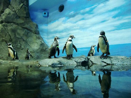 Fujisawa, اليابان: 愛嬌あるペンギン
