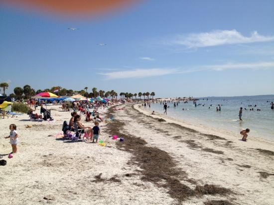 Tarpon Springs, FL: nice beach minus the sea weed that needed removed