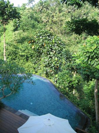 Natura Resort and Spa : The forest with pools