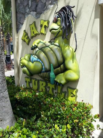 Fat Turtle At YHG