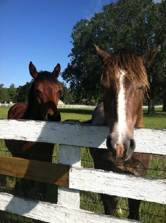 Country Chalet Inn: Mom and Baby