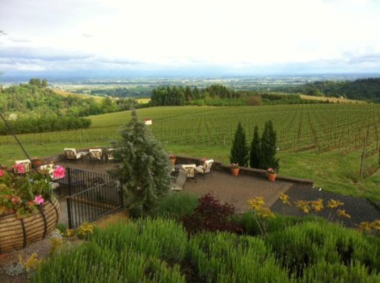Black Walnut Inn & Vineyard: View from the entry drive.