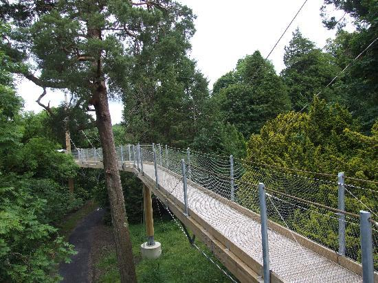 Parque Forestal Lough Key: Tree Canopy Trail