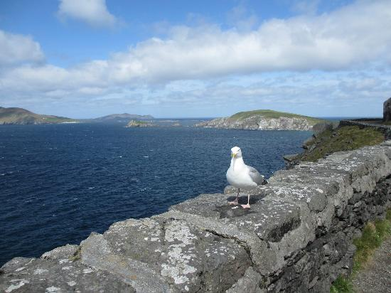 Dingle Tours: Looking out at the Blaskets