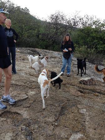Casa Raab Dogs