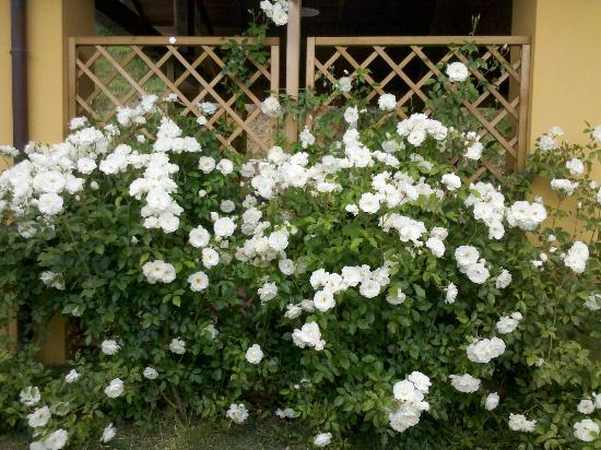 Agriturismo Foddi: le rose abbondano ovunque