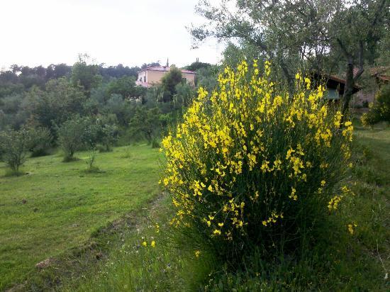 Agriturismo Foddi: le ginestre e l'azienda