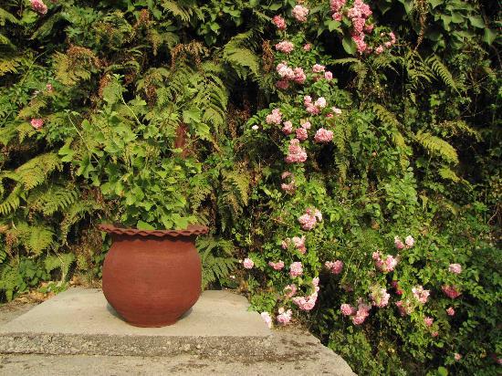 Hotel Padmini Nivas: One of the many gardens in the Nivas