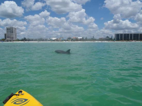 Robin Hood Rentals : We saw a dolphin while using the kayaks!