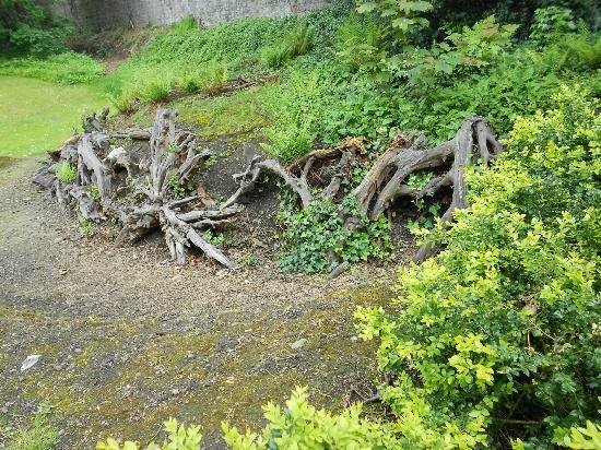Iveagh Gardens : Iveagh Garden