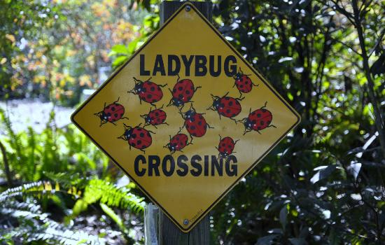 Friendly reminder that lady bugs inhabit Secret Woods Nature Center