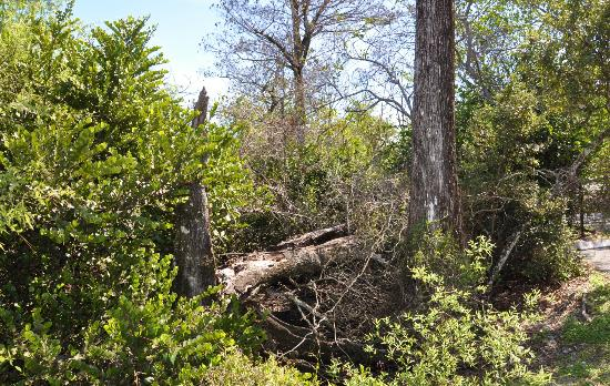 Secret Woods Nature Center: Florida's natural habitat