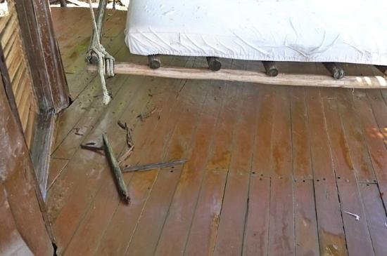 Azulik: More rotted wood that fell on our deck another time