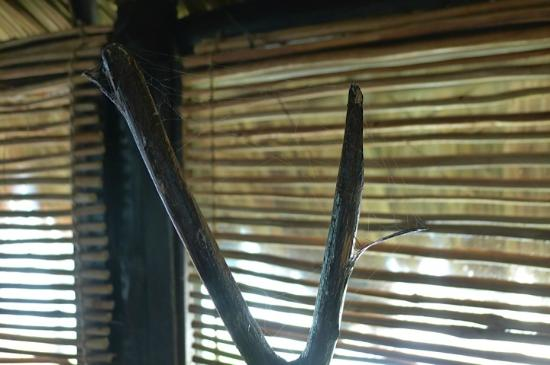Azulik: Cobwebs on shower head holder