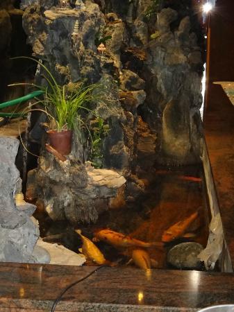 Passy Mandarin : koi pond close up