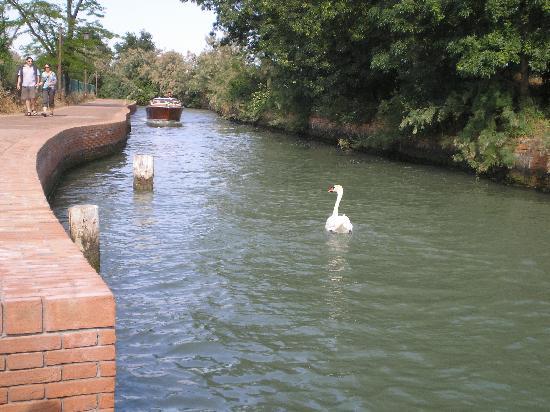 Isla de Torcello: Canal toward basilica
