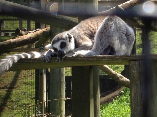Noah's Ark Zoo Farm: omg its hot
