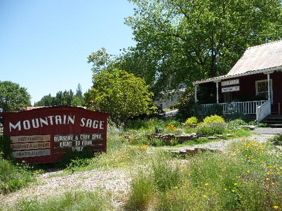 mountain sage cafe