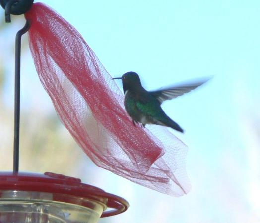 Hooper Homestead Bed and Breakfast: The Hummingbirds were beautiful