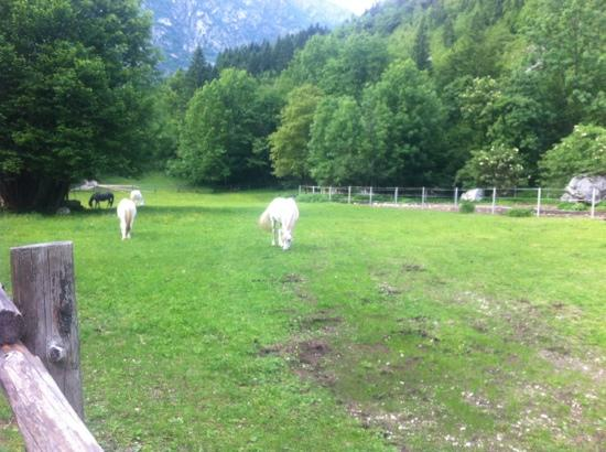 Pristava Lepena: horses on the property