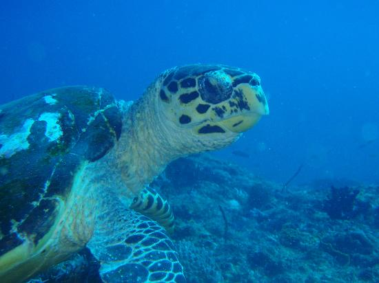 Diving Bluetribe Moofushi : Turtle Moofushi