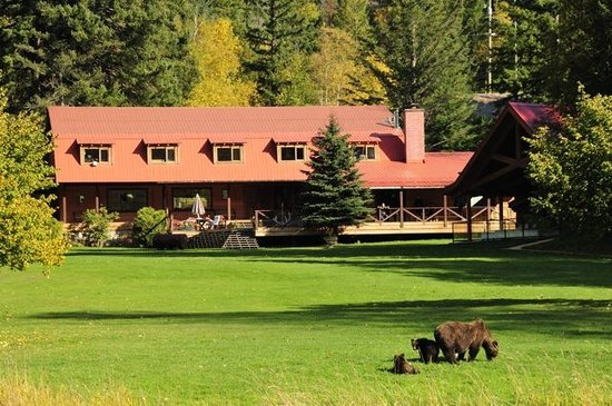 Tweedsmuir Park Lodge & Bear Viewing: Grizzly Bear viewing on lawn at Tweedsmuir Park Lodge. Photo: Mike Wigle