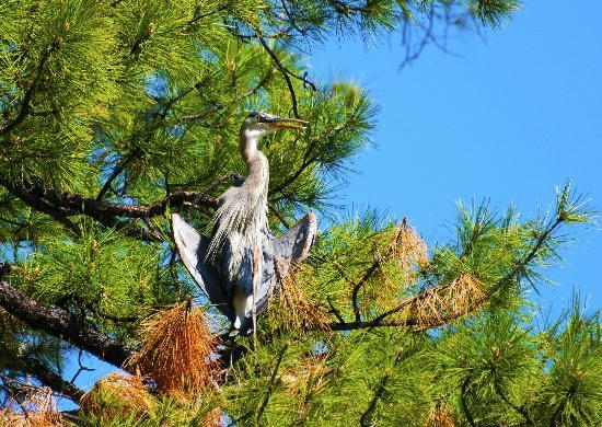 Lynx Lake Recreation Area: Great Blue Heron