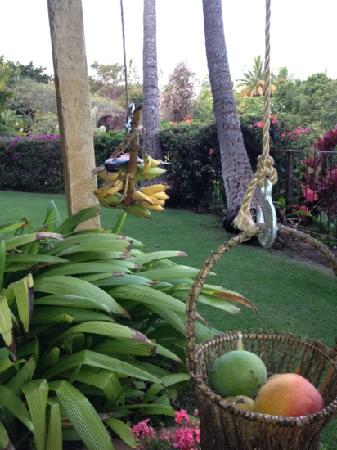 Hale Huanani Bed and Breakfast: delicious fruit at your finger tips